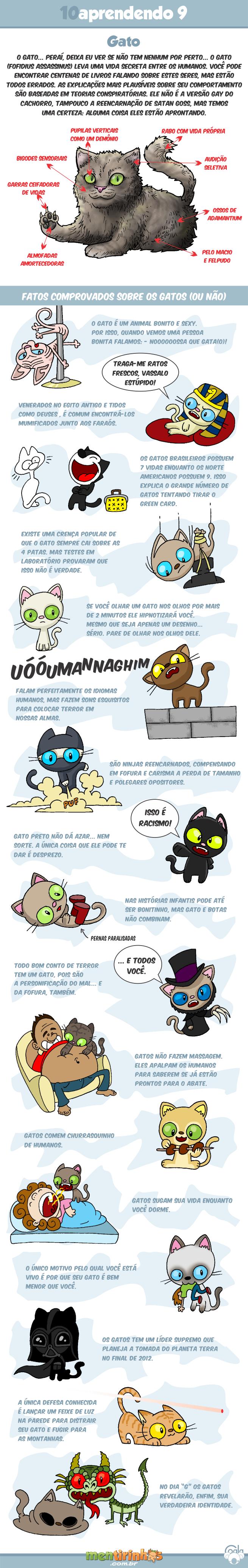 10aprendendo9_gatos