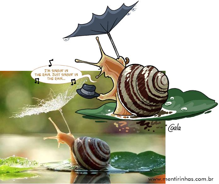 caracol_guarda-chuvaOK