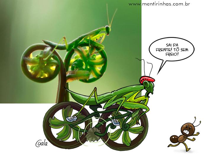 louva_bike2