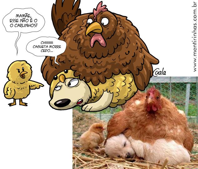 galinha_caoOK